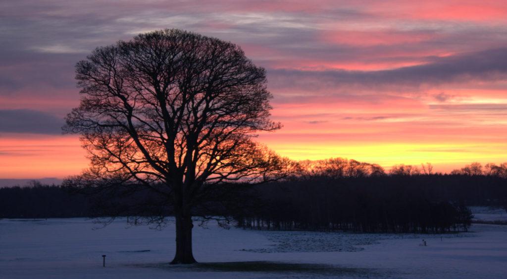 Lone tree in winter sunset